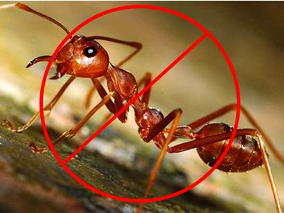 Hình ảnh: Phun, diệt kiến, diệt gián, diệt muỗi số 3